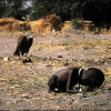 L'Africa, la carestia, le Corporations.