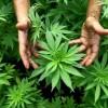 Legalizzazione, l'esempio del Portogallo
